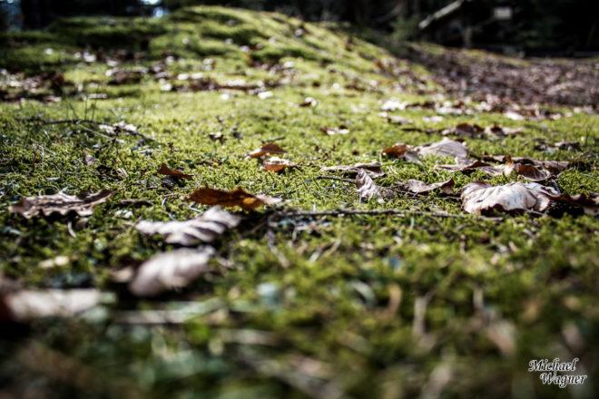 tiny landscape 3