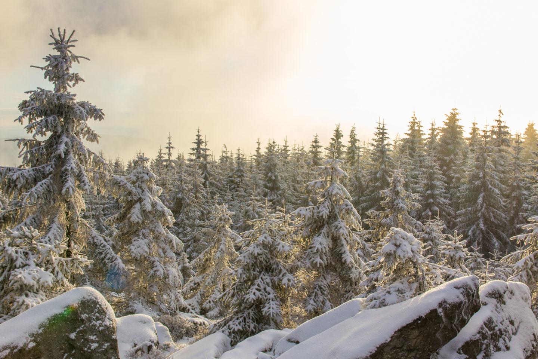 Der verschneite Wald und trübe sorgten für eine interessante Stimmung
