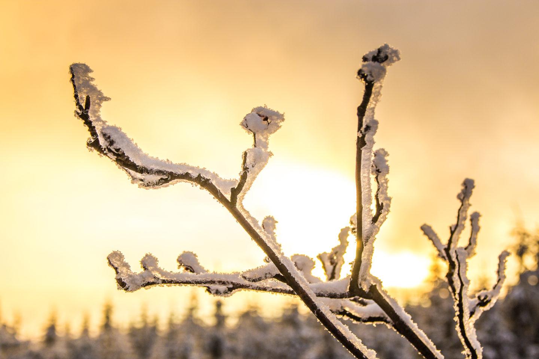 Durch die andauernde Kälte ist alles gefroren